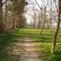 M1 Junction 12 dog walk and dog-friendly pub, Bedfordshire - Dog walks in Bedfordshire