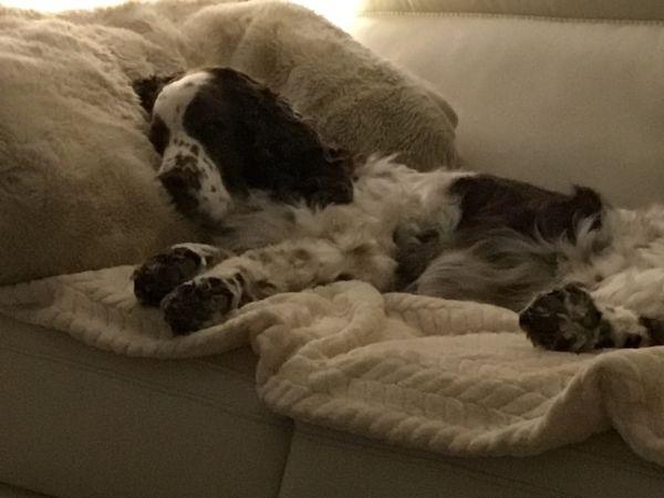 Comfy Millie