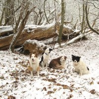 Ashenbank Woods dog walks, Kent - Dog walks in Kent