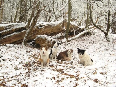Ashenbank Woods dog walks, Kent - Driving with Dogs