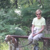 Brackloon Woods dog walk, RoI - Dog walks in Ireland