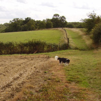 A1M Jct 15 dog walk, Cambridgeshire