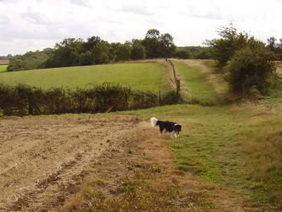 A1M Jct 15 dog walk, Cambridgeshire - Driving with Dogs