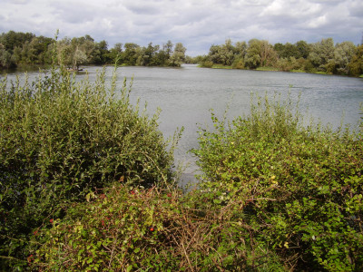 A1 dog walk near St Neots, Cambridgeshire - Driving with Dogs