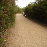 A1 dog walk near St Neots, Cambridgeshire - Dog walks in Cambridgeshire