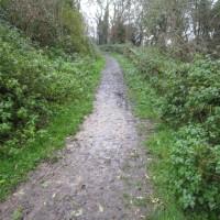 A429 lakeside dog walk near Cirencester, Gloucestershire - IMG_6112.JPG