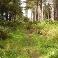 Stapleford Wood dog walks near Newark, Lincolnshire - Dog walks in Lincolnshire