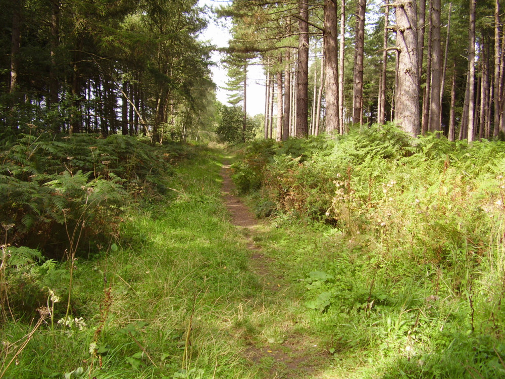 Stapleford Wood dog walks near Newark, Lincolnshire - Dog walks in Lincolnshire