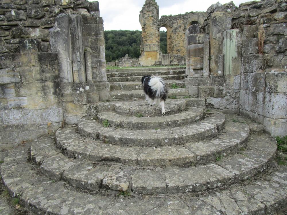 Byland Abbey dog walk, Yorkshire - Yorkshire dog-friendly pub and dog walk