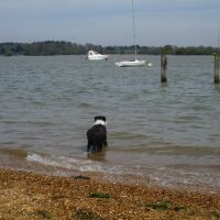 Waterside dog walk with pub, swimming and boat trips, Suffolk - Suffolk dog walks with swimming and a pub