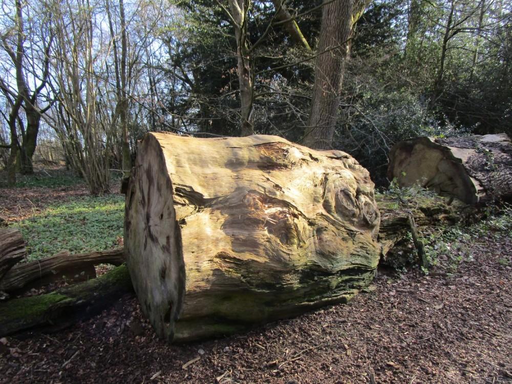 A246 accessible dog walk in Effingham Forest, Surrey - Surrey dog-friendly pub with dog walk.JPG