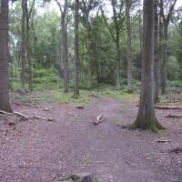 Twyford Wood dog walks, Lincolnshire
