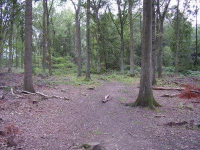 Twyford Wood dog walks, Lincolnshire - Driving with Dogs