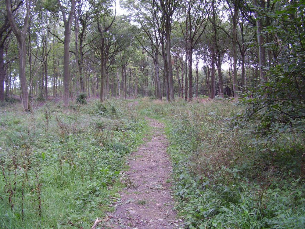 Twyford Wood dog walks, Lincolnshire - Dog walks in Lincolnshire