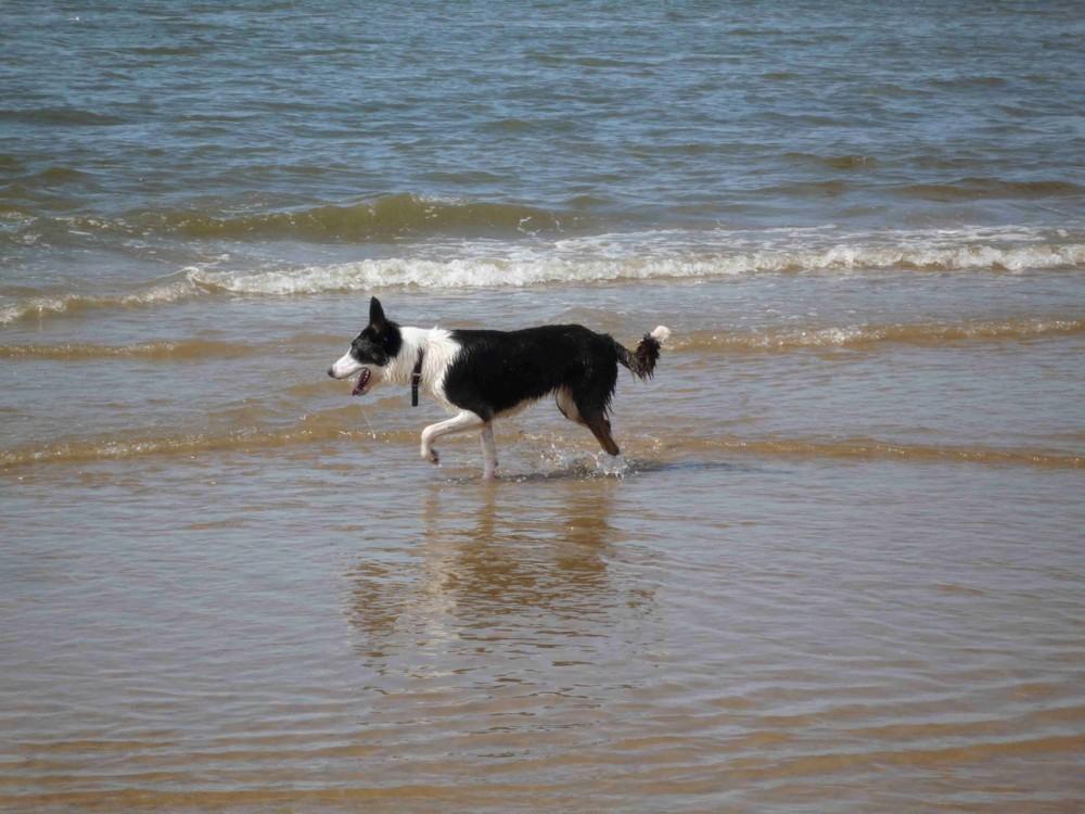 Formby dog-friendly beach, Merseyside - Dog walks in Merseyside