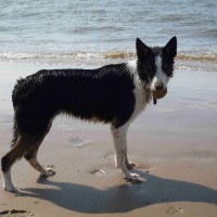 Formby dog-friendly beach, Merseyside - Dog walks in Merseyside