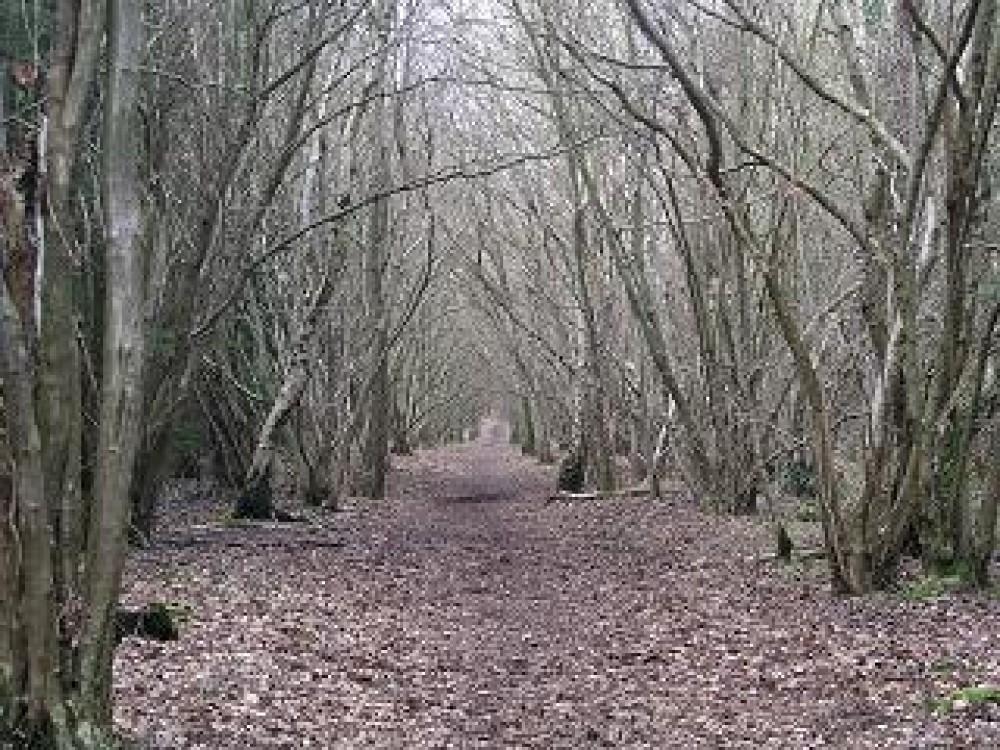 M40 Junction 13 Oakley Woods dog walk, Warwickshire - Dog walks in Warwickshire