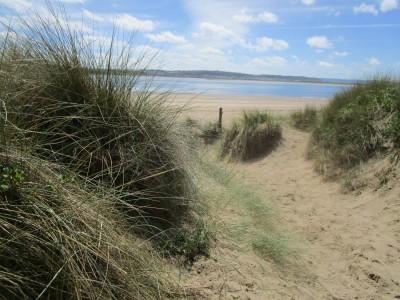 Saunton Sands dog-friendly beach, Devon - Driving with Dogs