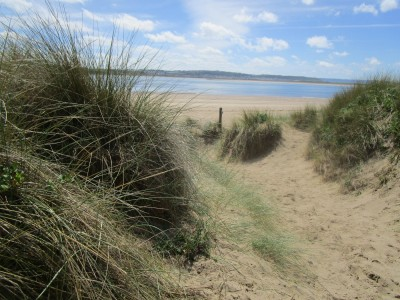 Saunton Sands dog-friendly beach, Devon - Driving with Dogs