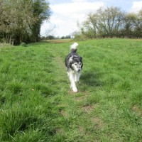 Dog walk and dog-friendly pub near Moreton in Marsh, Warwickshire - Warwickshire dog-friendly pubs and walks.JPG
