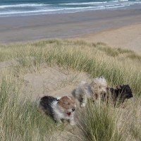 Holywell Bay Beach - dog-friendly, Cornwall - 20190423_110929.jpg