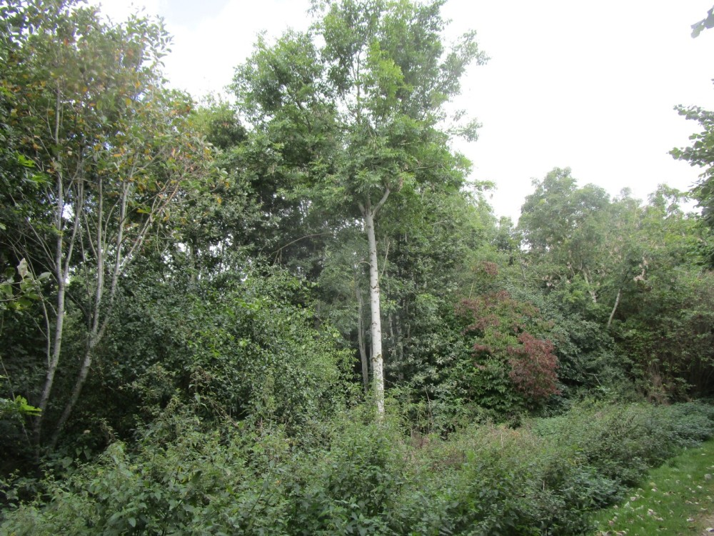 A420 Woodland walk and dog-friendly pub near Swindon, Wiltshire - Cotswold-dog-walk-and-pub.JPG