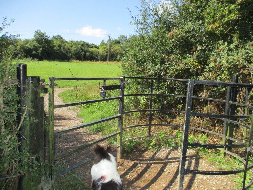 A419 dog walk near Swindon, Wiltshire - IMG_3131.JPG