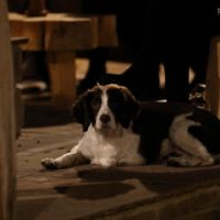 A343 dog-friendly pub and dog walk near Andover, Hampshire - Hampshire dog-friendly pub and dog walk
