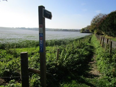 M20 Junction 8 dog-friendly pub and dog walk, Kent - Driving with Dogs