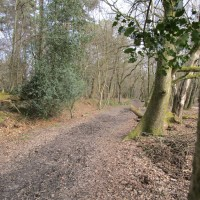 Forest Centre dog walks, East Sussex - Sussex dog walks.JPG
