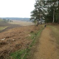 A149 Nature reserve walk with full-on birdsong, Norfolk - Norfolk nature ramble with the dog.JPG