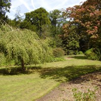 Leicester City park dog walk, Leicestershire - Dog walks in Leicestershire