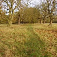 Packwood Avenue dog walk, Warwickshire - Dog walks in Warwickshire