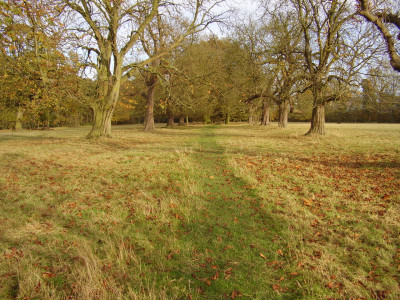 Packwood Avenue dog walk, Warwickshire - Driving with Dogs