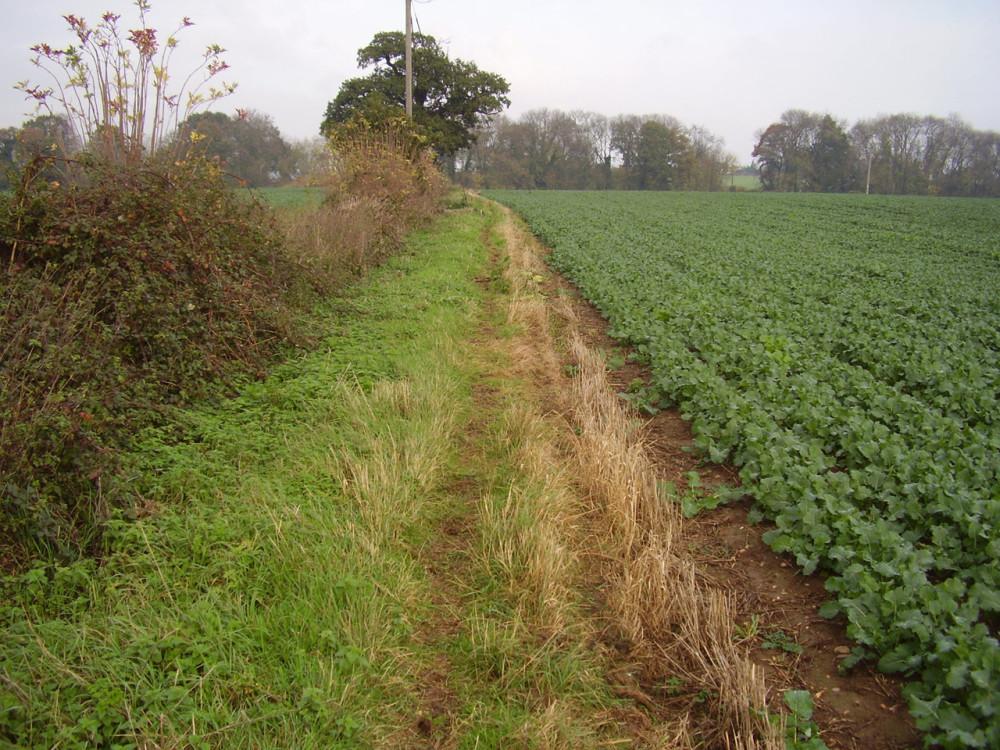 A425 near Leamington dog-friendly pub and dog walk, Warwickshire - Dog walks in Warwickshire