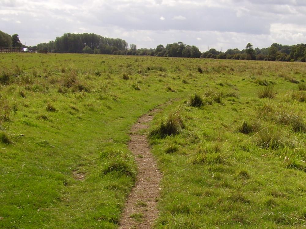 Lammas Meadows dog walk, Cambridgeshire - Dog walks in Cambridgeshire