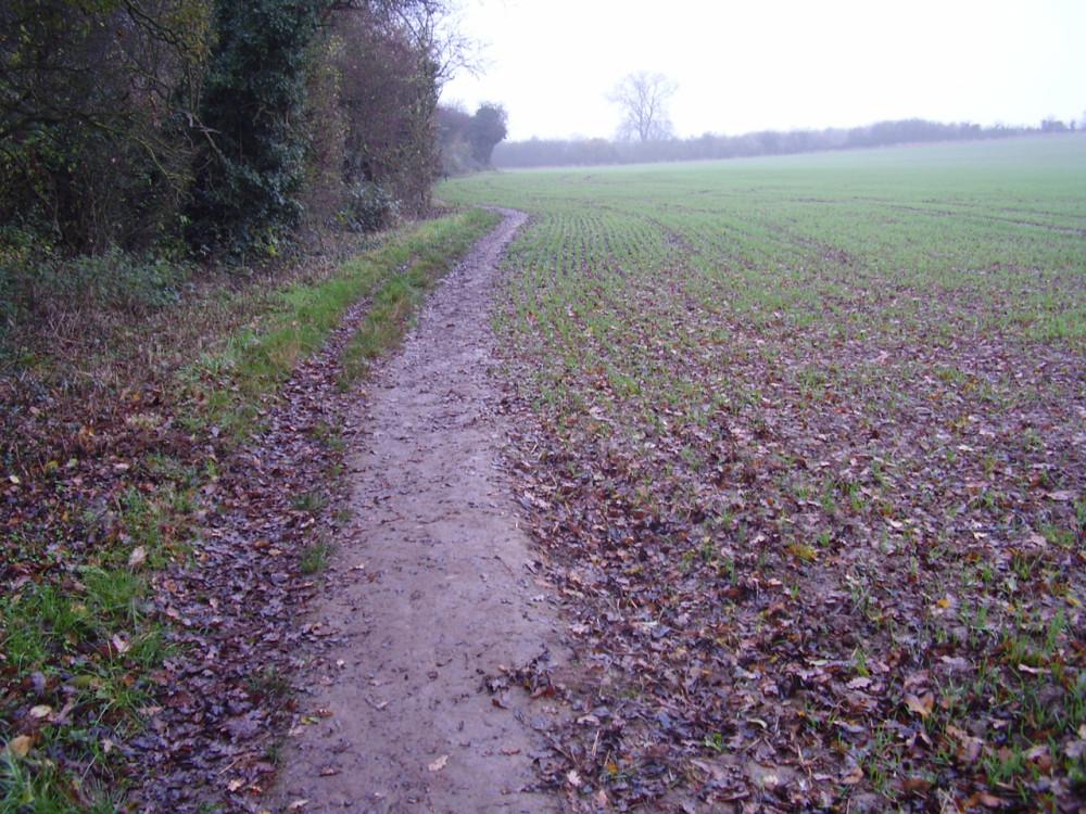 Lambley Dumbles dog walk, Lambley, Nottinghamshire - Dog walks in Nottinghamshire
