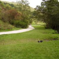 Dovedale Delight dog walk, Derbyshire - Dog walks in Derbyshire