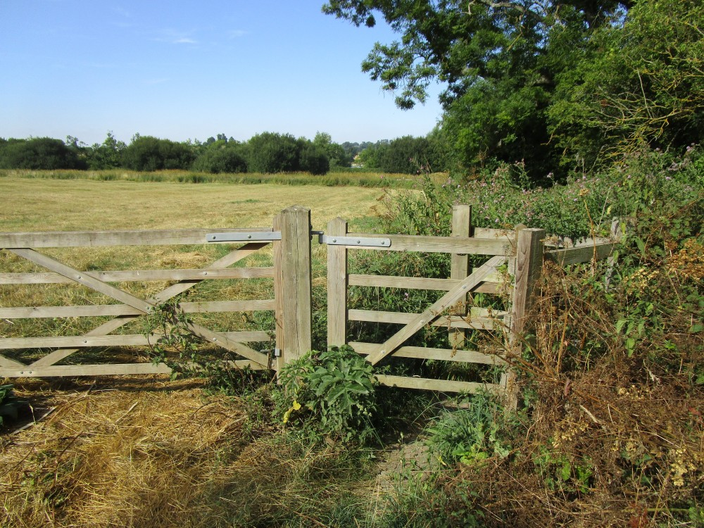 Reservoir dog walk near Upper Boddington, Northamptonshire - Dog walk in Northamptonshire