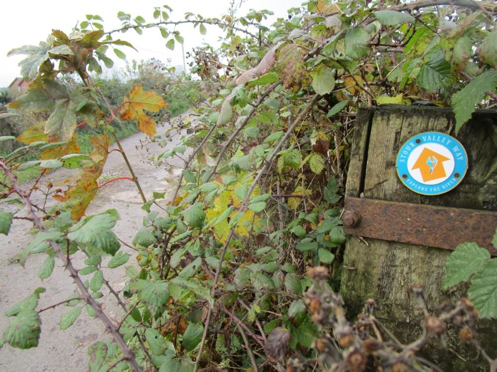 Stour Valley Way dog walk and pub, Dorset - IMG_6675.JPG