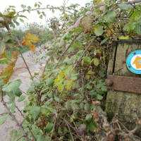 Stour Valley Way dog walk and pub, Dorset - IMG_6675.JPG
