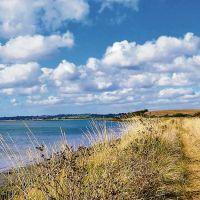Riverside dog walks and dog-friendly pubs, Essex - Essex dog walking routes.jpg