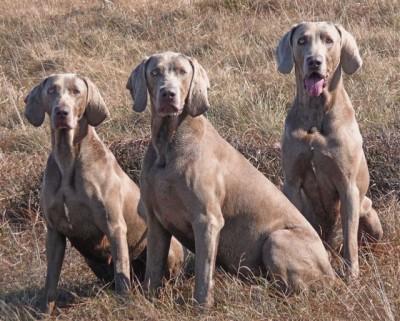 M62 Junction 22 dog walk Saddleworth Moor, Lancashire - Driving with Dogs