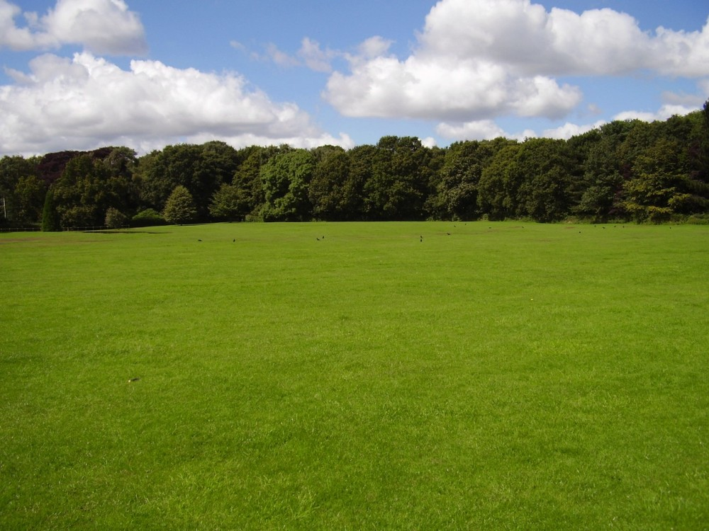 M1 Junction 25 dog walk and cafe near Derby, Derbyshire - Dog walks in Derbyshire