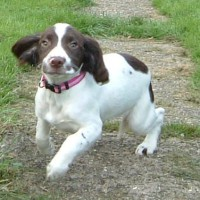 Waggy Tails dog walking service, Kent - Image 1
