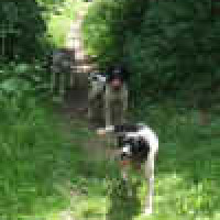 Waggy Tails dog walking service, Kent - Image 3