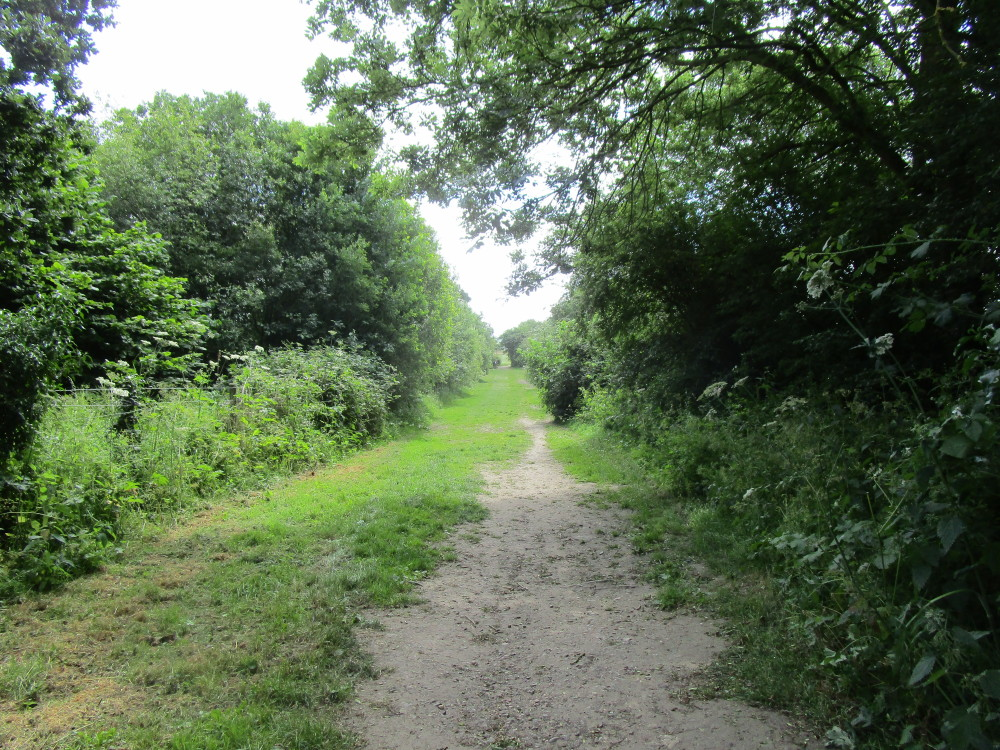 Roman meadow dog walk, Leicestershire - Leicestershire dog walk