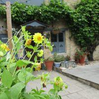 Dog-friendly inn and dog walk near Witney, Oxfordshire - Dog walks in the Cotswolds.JPG