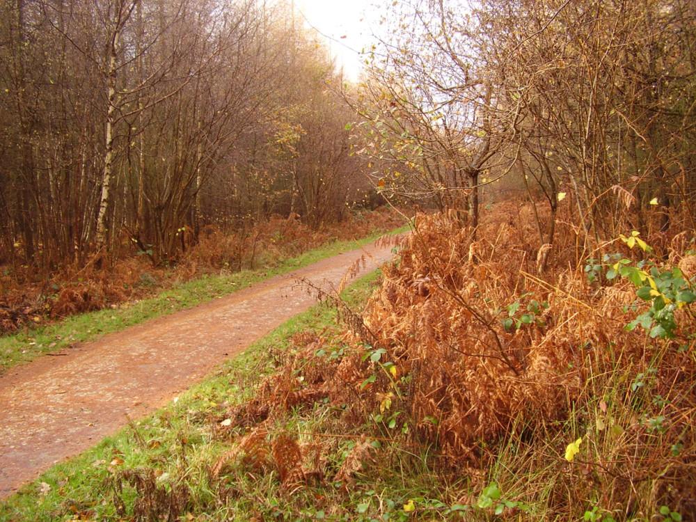 Bourne Woods dog walk, Lincolnshire - Dog walks in Lincolnshire