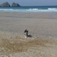 Holywell Bay Beach - dog-friendly, Cornwall - 20190423_111246.jpg